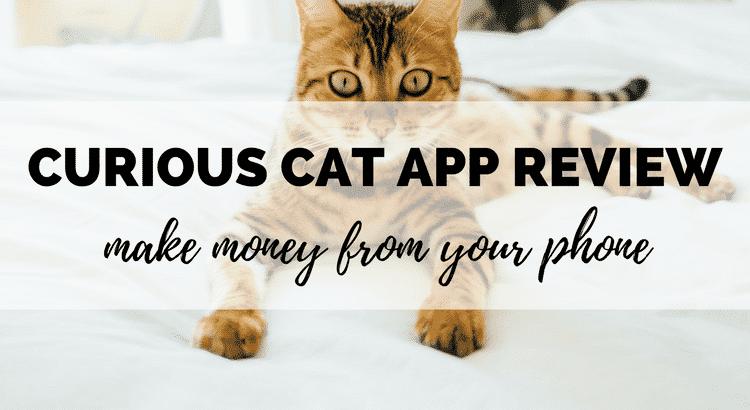 curious cat review