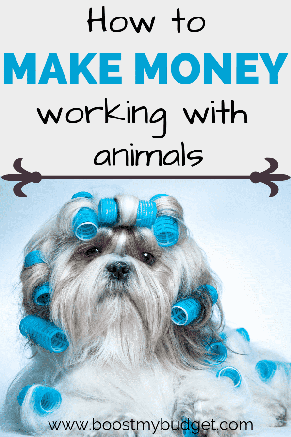 Want to make money off your dog or cat? Click through for 6 fun ideas on how to make money working with animals!