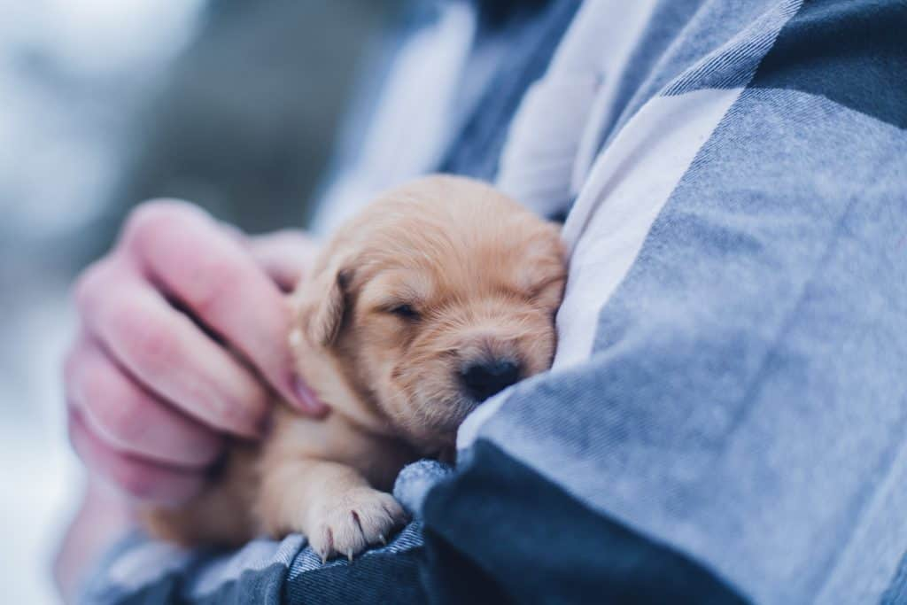 Imagine getting paid to hang out with doggos! Well, you can! Here are 6 adorable and easy ways to make money with animals. From pet sitting to creating pet products, these are the perfect side hustles for animal lovers. Number 2 is the perfect work at home job for stay at home parents!