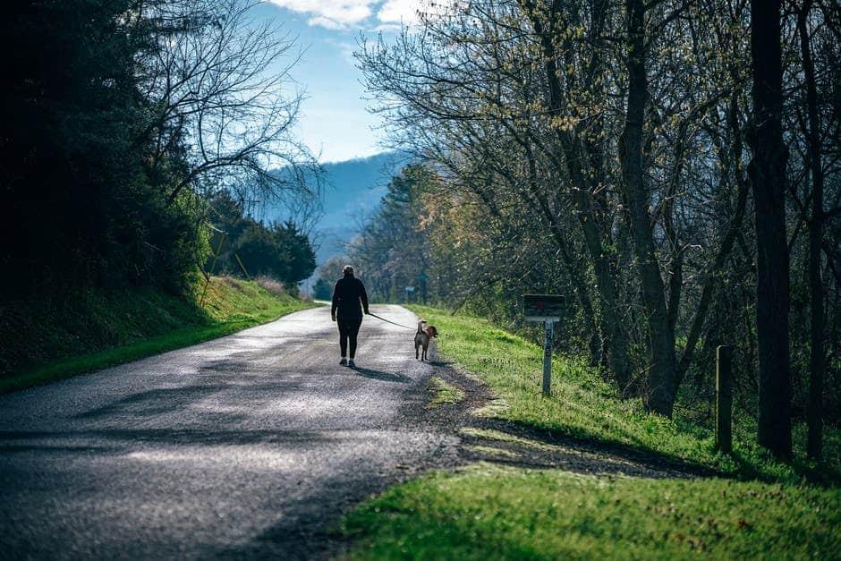 Side business ideas - dog walking